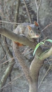 another cute squirrel