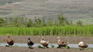 shooting ducks?