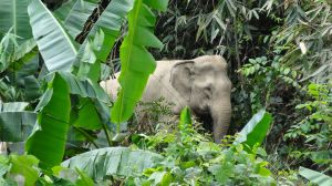 an elephant emerges out of the jungle