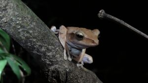such a cute frog