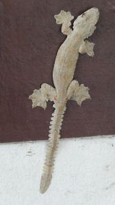 super cool type of gecko