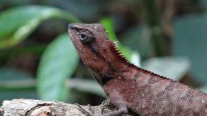 cool lizard