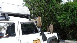 cheeky monkeys on Lara