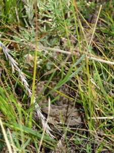 a gorgeous little snake we spotted whilst hunting for the famous Altai statues we never found