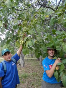Almaz and Jon checking some walnuts