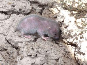 a very cute mole