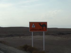 we understand this sign and also see many dromedaries in the deserts