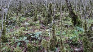 lots of moss everywhere