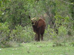 seeing an elephant when you are on foot is a complete different story from seeing them when in your car!