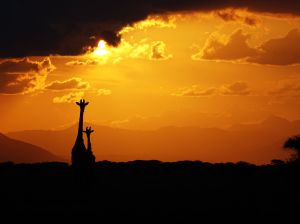 mum and baby giraffe in the setting sun (Tsavo East)