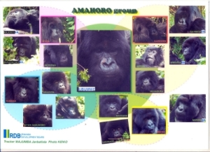 we visited the Amahoro group