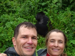 the first gorilla we see is one of the 5 silverbacks in the Amahoro group